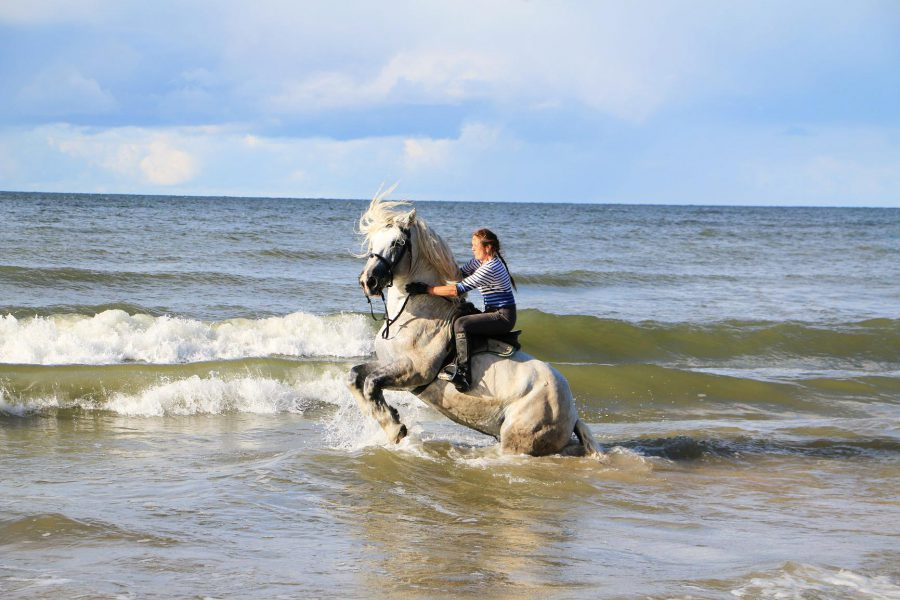 Jana mit Hengst in der Ostsee - Titanen on tour in Estland
